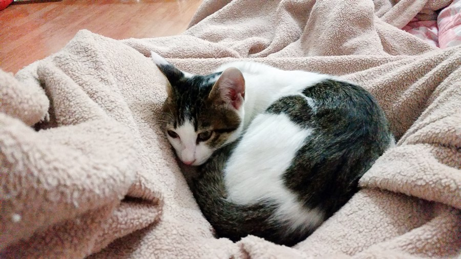 curled-up